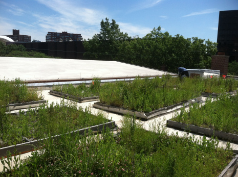 Native Green Roof Plants