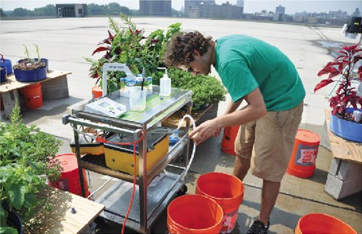 A roof garden grows in the Bronx
