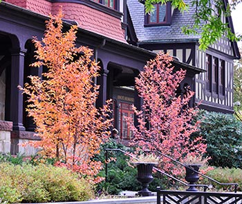 Tree Replacement Master Plan