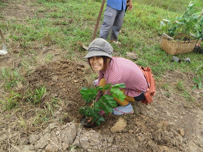 50 Trees Planted