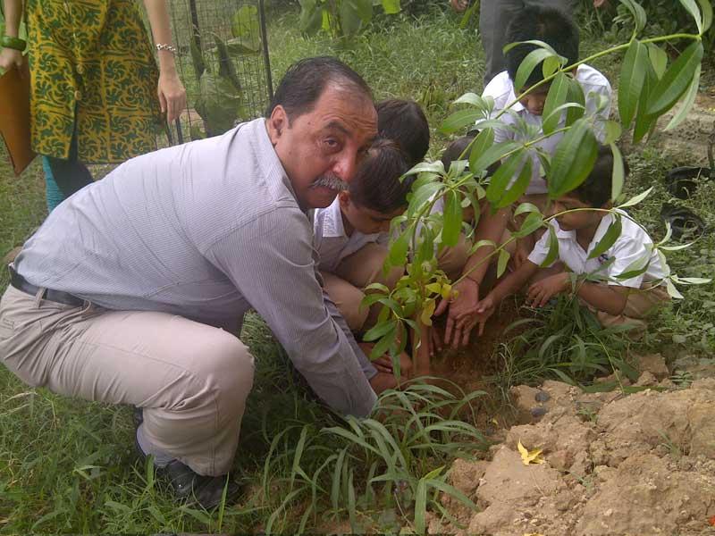 APX Tree Plantation DRIVE