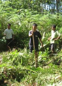Young men in Bendum clearing the bracken