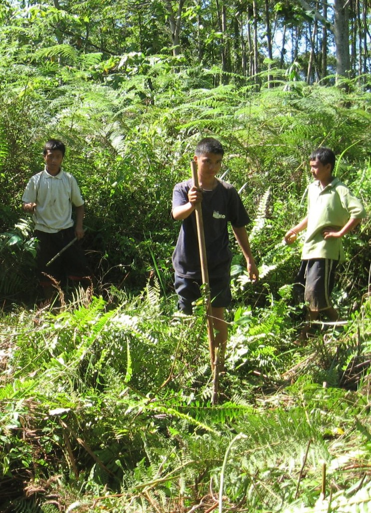 Assisting Forests in Bendum: The Pulangiyen approach in Bendum, Bukidnon
