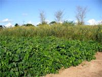 Kasisi Agricultural Training Centre (KATC)