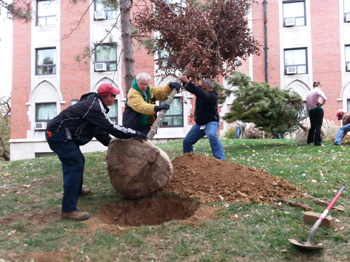 University Preps for 2013 Tree Campus Recertification