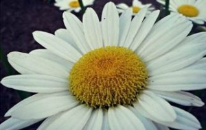 flora_xu