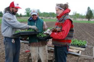 guelph---farm-3-plant