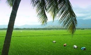 Kerala to disappear in ten years: Jesuit environmentalists