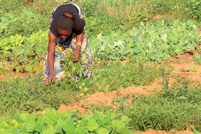 Jesuits turn back clock on farming methods