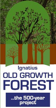 Ignatius Old Growth Forest