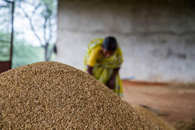 Miracle grow: Indian farmers smash crop yield records without GMOs