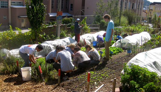 The Minor in Urban Agriculture