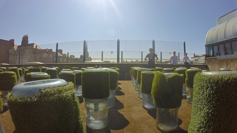Rooftop farming at Belvedere College