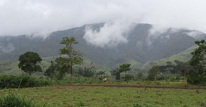 Women enterprise, agroforestry opportunities grow in Miarayon