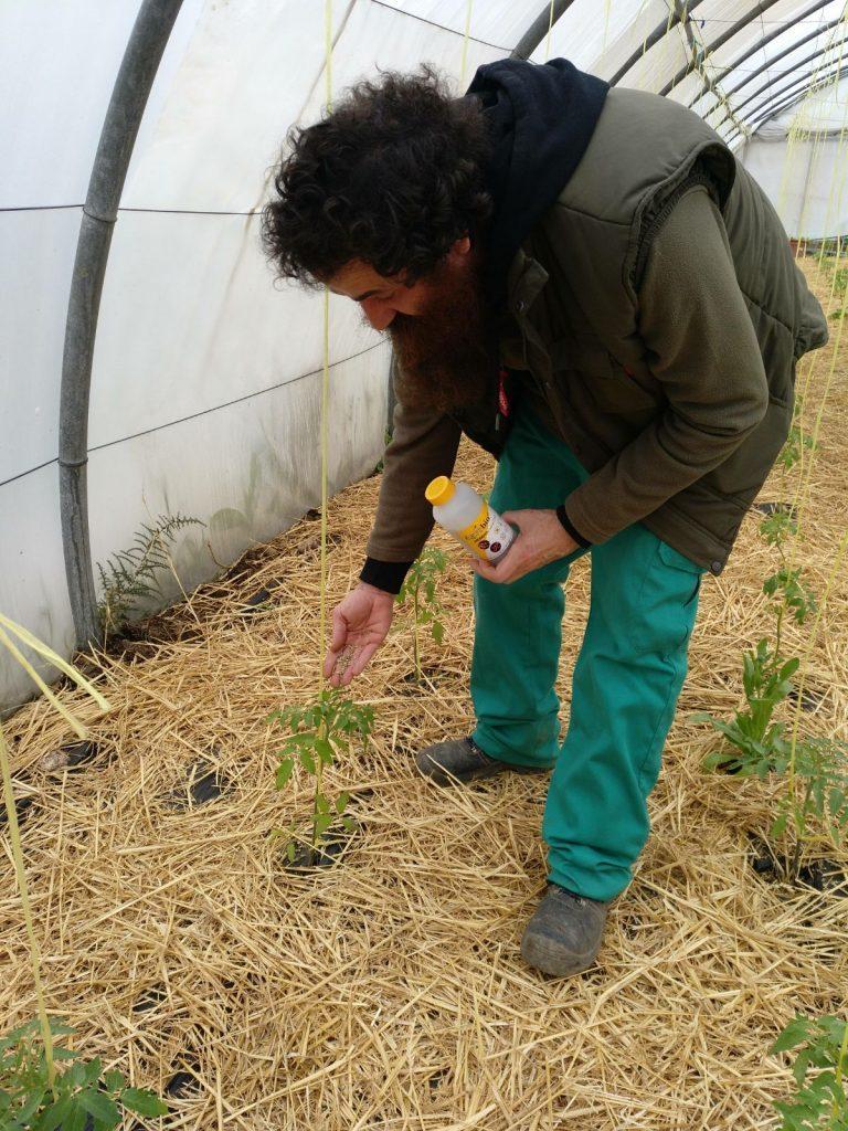 """Tratamientos ecológicos en los invernaderos – """"Ecological treatments in greenhouses"""""""