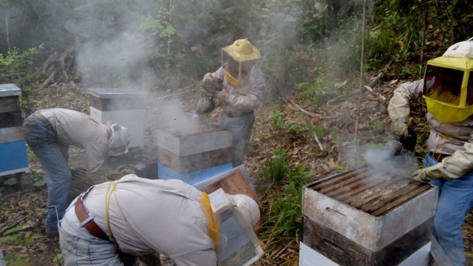 Trabajar con las abejas, un proyecto de vinculación, de la alumna Victoria Hilario