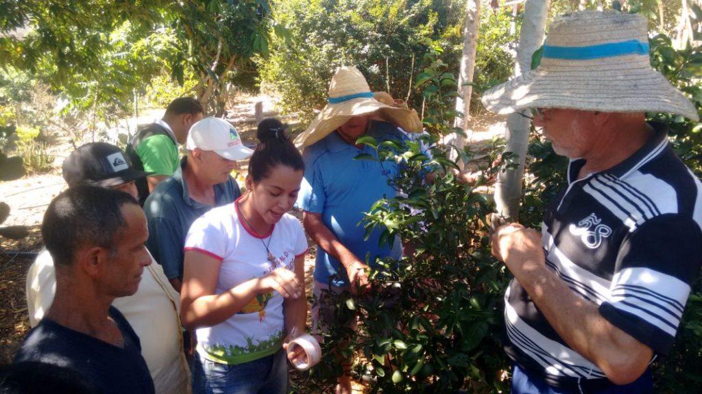 Camponeses realizam práticas agroecológicas em Encruzilhada