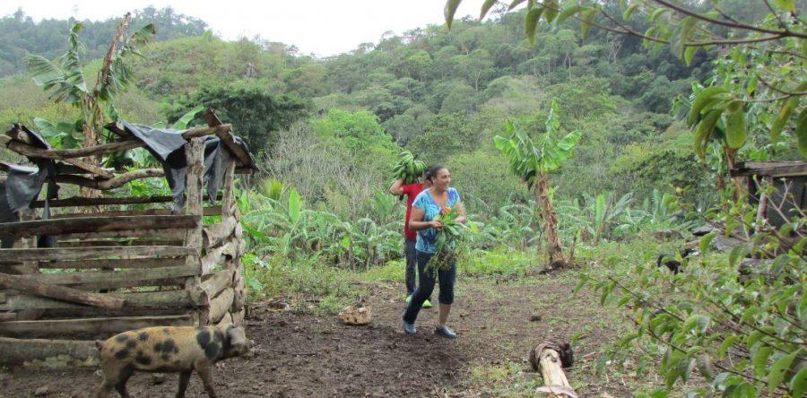 Nitlapan forma parte de plataforma mundial sobre agricultura familiar
