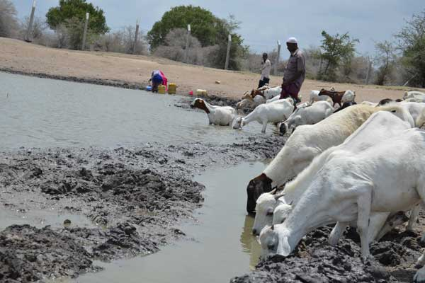 Jesuit Hakimani Centre improving equity and faireness in water management in Garissa County