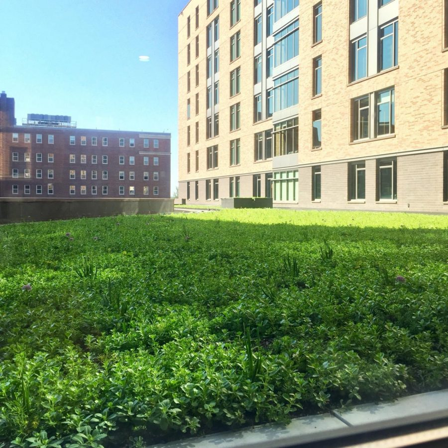 Wild Commons green roof part of Campus Sustainability initiative – Marquette University