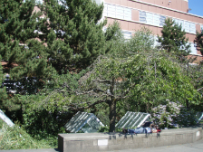 SU Greenroofs: Landscape & Urban Gardening