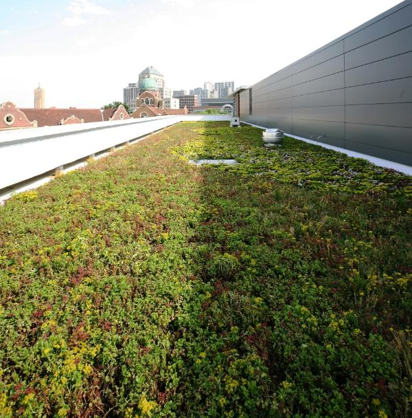 Green Rooftops in Loyola University Chicago