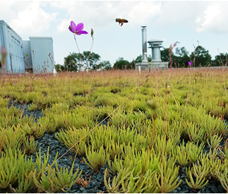 University of Maryland to Install More Green Roofs