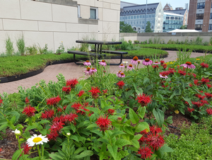 New sustainability project adds green space to Campus: A new green roof revitalizes the Village C esplanade