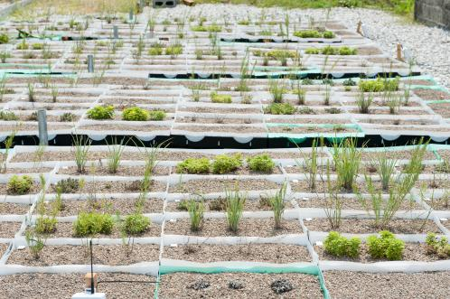 The Future of Green Roofs