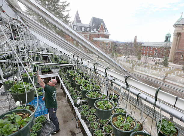 Princeton Review Names Holy Cross a 'Green College'