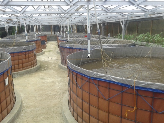 Fish Cultivation as Part of our Environmental Programme