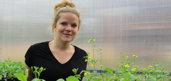 Plants Adapt to Climate Change, But There's a Catch – Fordham University News