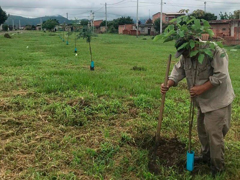 PLANTAR ÁRBOLES COMO MEDIDA PARA REDUCIR LOS EFECTOS DEL CAMBIO CLIMÁTICO – Fundacion Accion Cultural