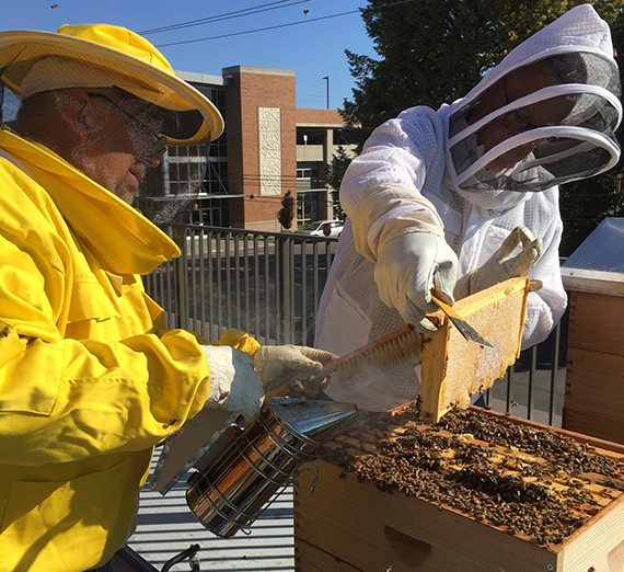 Gonzaga's Bee Campus USA Certification Renewed – Gonzaga University