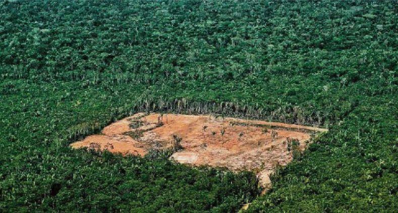 O Globo: Floresta em pé vale mais que terra para cultivo – NIMA – Núcleo Interdisciplinar de Meio Ambiente
