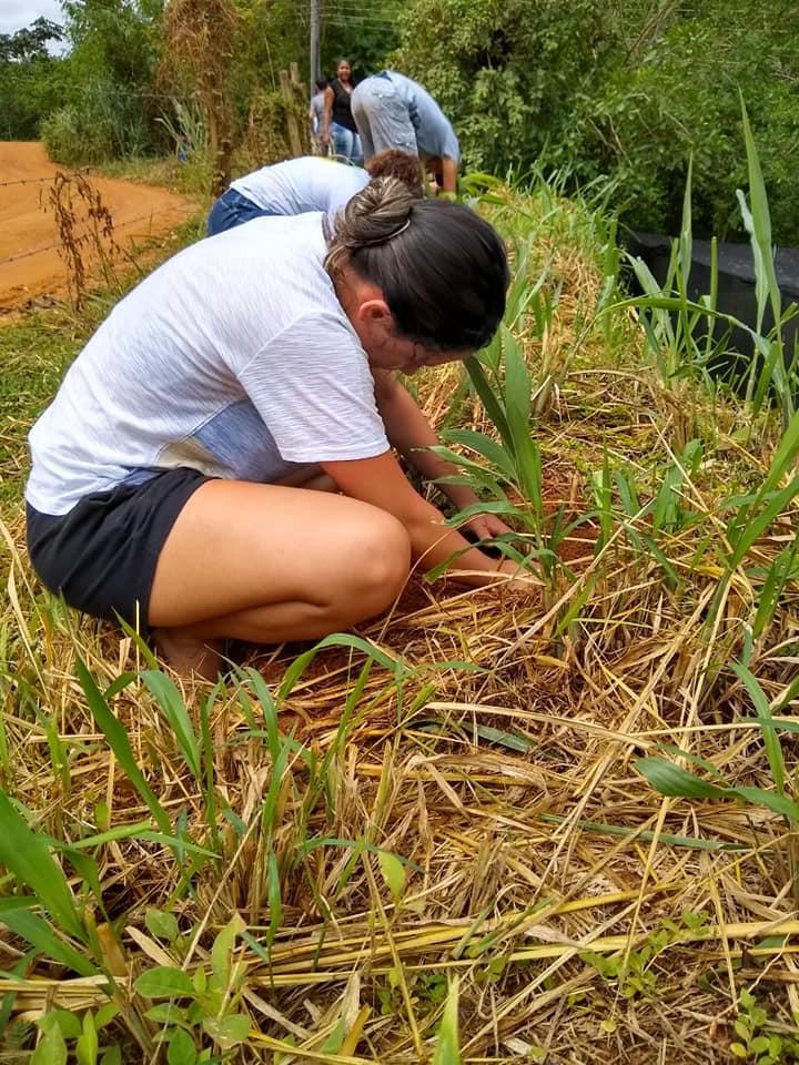 Sistema Agroflorestal na EFA – Belo Monte – Movimento de Educação Promocional do Espírito Santo (MEPES)