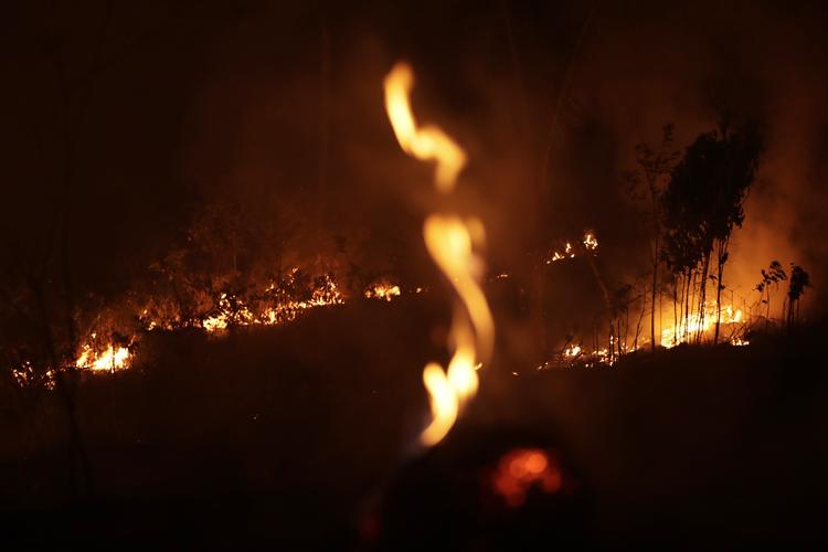 Pope Francis urges action to save burning Amazon rainforest