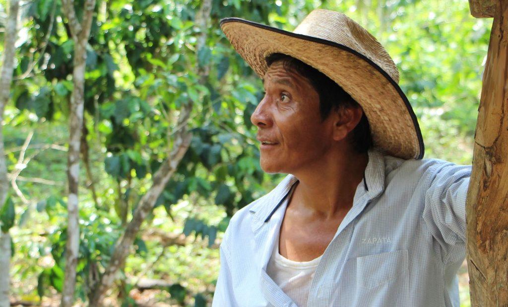 Productores de café luchan contra la crisis climática en México – CPAL