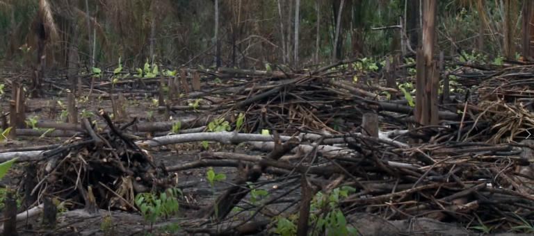 Florestas na Amazônia pós-fogo demoram sete anos para recuperar funções – REPAM
