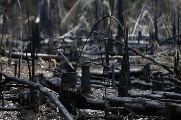 LA DEFORESTACIÓN EN LA AMAZONÍA BRASILEÑA SALTÓ UN 222 % EN AGOSTO – Fundacion Accion Cultural Loyola