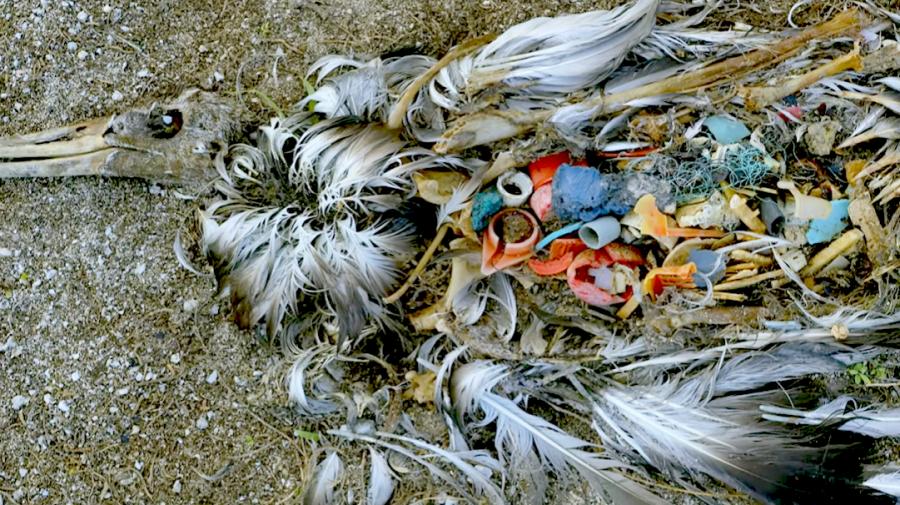 Video del Papa – Septiembre 2019: La protección de los océanos – CPAL