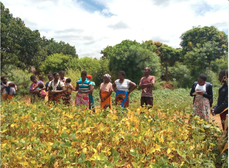 Building resilience of farming communities in Kasungu, Malawi, to the impacts of climate change – JCED Malawi