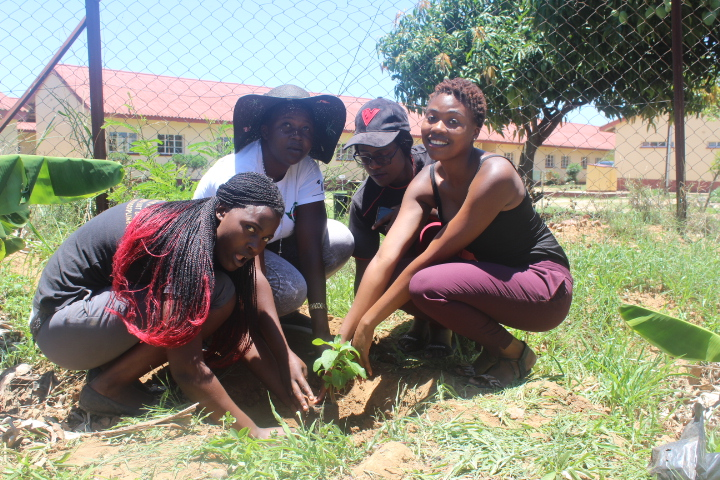 Tree planting: A Process not an Event – CYNESA